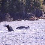 Naukati Bay Adventures Alaska fishing lodge image31